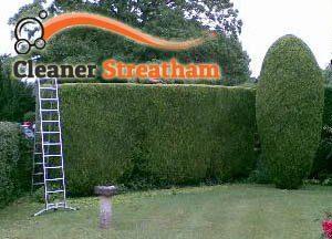 Hedge Maintenance SW16